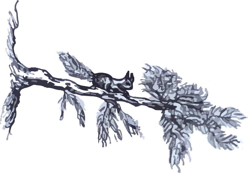 Graphic - Forest Celebration Squirrel 2018 (Midsummer night blue)